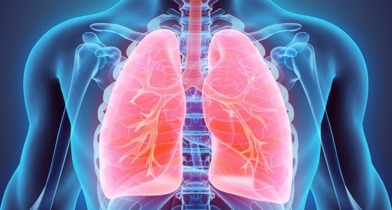 Modell einer Lunge /yodiyim, stockadobecom