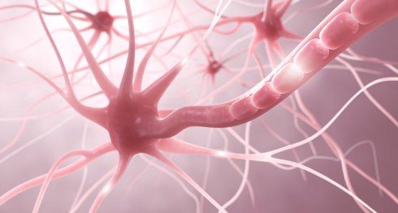 Nervenzellen /ag visuell, stockadobecom