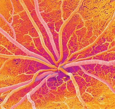Retinale Gefäßanalyse