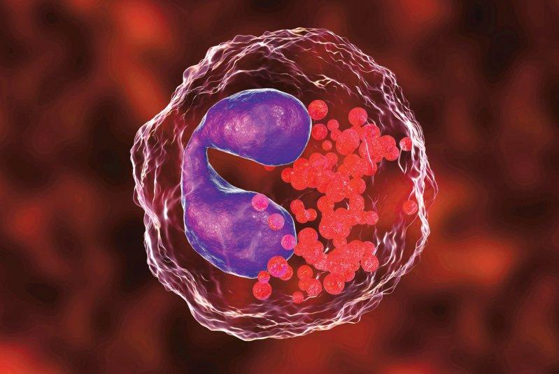 Die Konzentration der eosinophilen Granulozyten im Blut ist ein vielversprechender Biomarker für die Diagnose und Behandlung der COPD. Foto: Kateryna Kon/stock.adobe.com