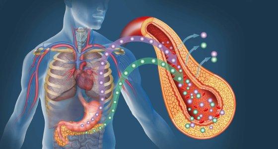 Illustration des Diabetes /ilusmedical stock.adobe.com