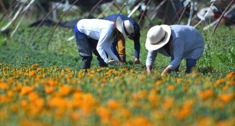 Ursachensuche für Nephropatien junger Agrararbeiter