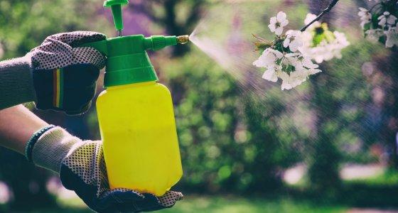 Insektizid aus einer gelben Sprühflasche wird auf einen Obstbaum gesprüht. /encierro, stock.adobe.com