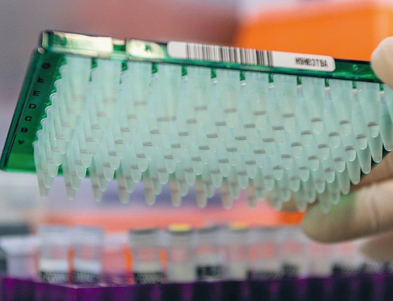 Beim Pooling werden mehrere Abstrichproben gemeinsam per PCR auf Virus-DNA untersucht. Nur falls die Gesamtprobe positiv ausfällt, werden die Einzelproben noch einmal separat getestet. Foto: picture alliance/dpa/dpa-Zentralbild/Robert Michael