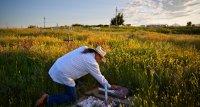 USA: Mortalität der weißen jüngeren Landbevölkerung gestiegen
