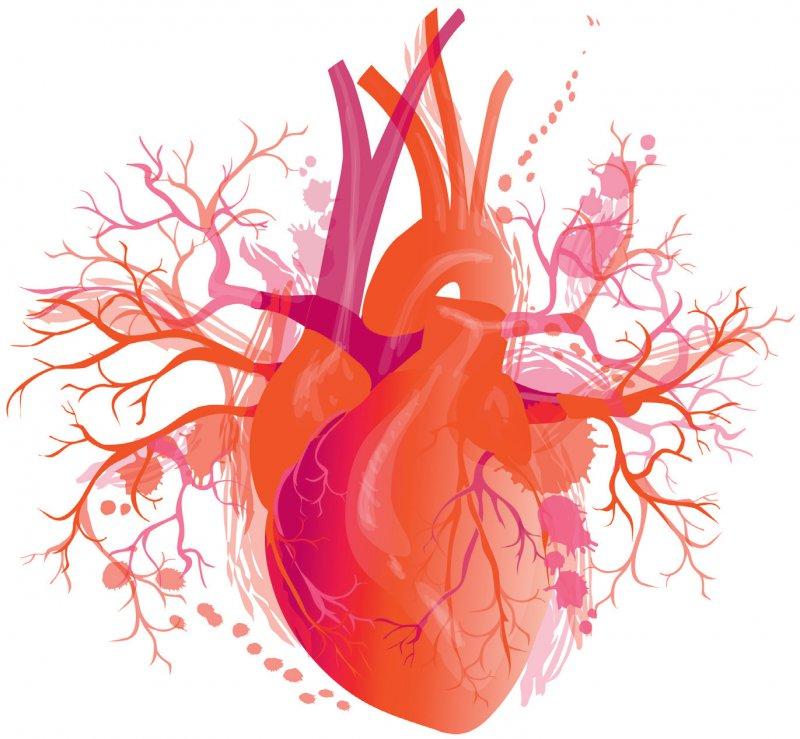 Während der Coronapandemie beobachtete die Deutsche Herz - stiftung einen deut - lichen Rückgang der stationären Behandlungen von Menschen mit Herz-Kreislauf- Problemen. Foto: mozart3737/stock.adobe.com