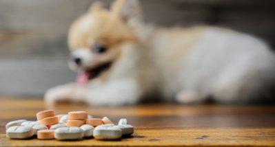 Mittel gegen Hundeerkrankung könnte als 3CL-Inhibitor gegen SARS-CoV-2 wirksam sein