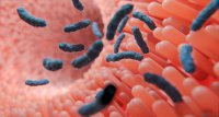 Studie: Darmbakterien könnten Verlauf von rheumatischen Erkrankungen beeinflussen