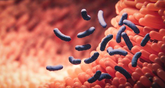 Wie Darmbakterien die Wirksamkeit von Medikamenten beeinflussen können