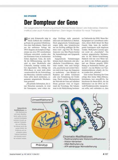 Das Epigenom: Der Dompteur der Gene