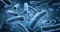 Pandemie führte zum Rückgang von Legionellosen