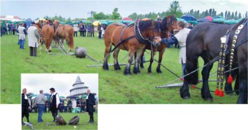 Trotz strömenden Regens verfolgten rund 400 Delegierte und Gäste des Deutschen Ärztetages im Magdeburger Elbauenpark, wie sich bis zu zwölf Pferde vergeblich bemühten, die luftleer gepumpten Halbkugeln auseinander zu bekommen. Fotos: Eberhard Hahne (3)