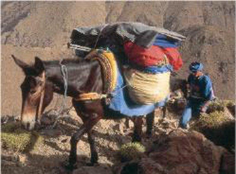 Maultiere tragen das Gepäck.
