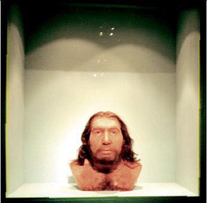Die Rekonstruktion des Neandertalers Foto: Iris Schatz/Rheinisches Landesmuseum