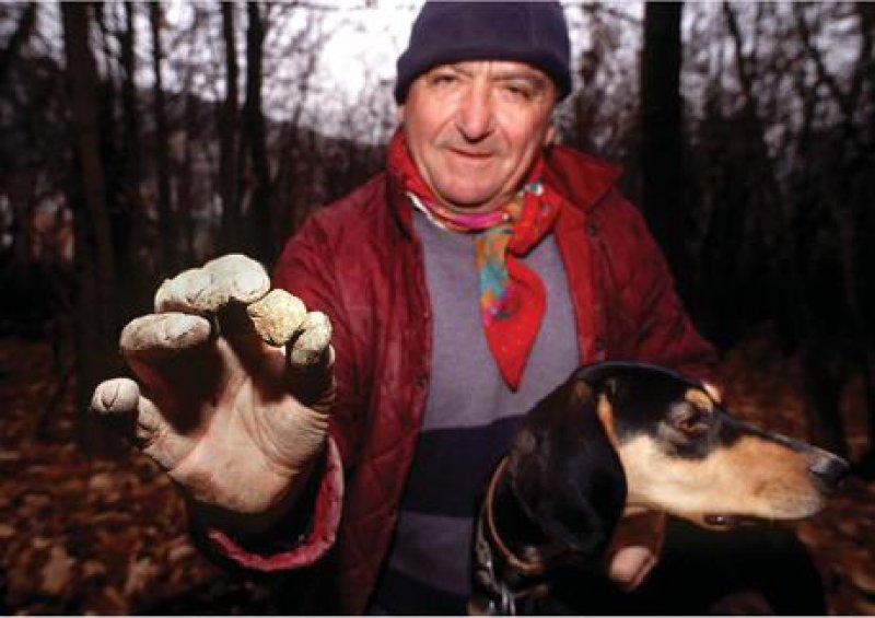 Trifulau Anselmo und Trüffelhündin Diana sind in den Wäldern der Langhe fündig geworden: Jedes Gramm der weißen Trüffel bedeutet bares Geld. Foto: dpa