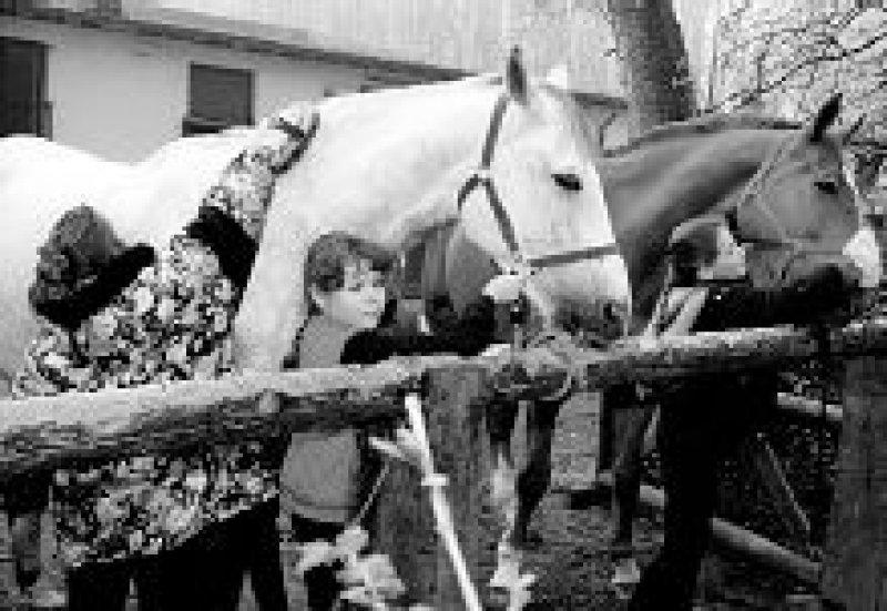 Pferde sind Fluchttiere, die bei Gefahr unberechenbar reagieren. Foto: DBV Versicherungen/GP