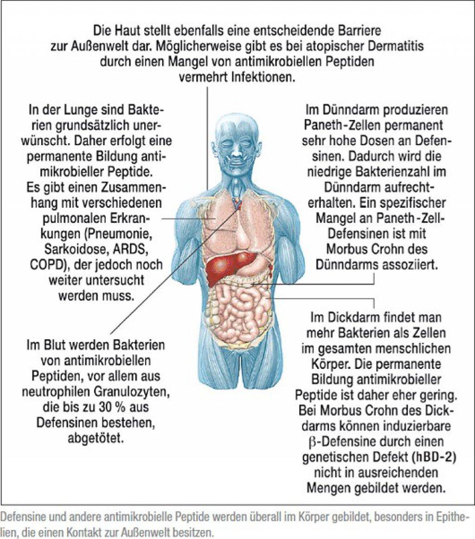 Schön Lage Der Lunge In Körper Galerie - Menschliche Anatomie Bilder ...
