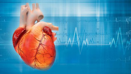 Herzbericht