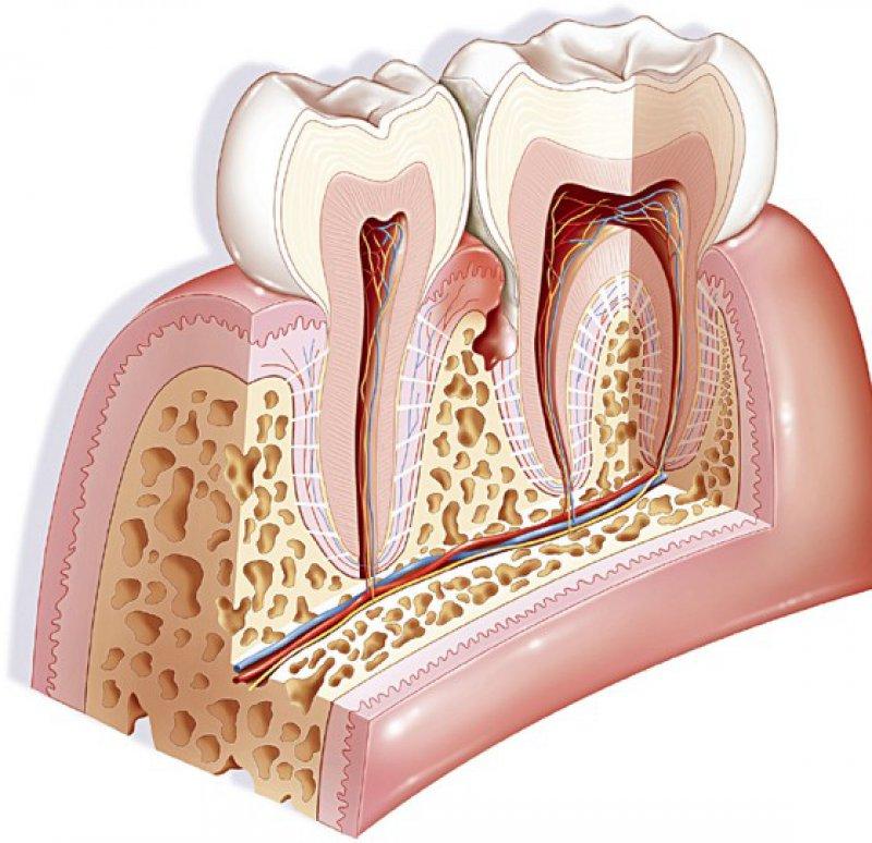Die Bedeutung der Parodontalbehandlung als präventivmedizinischer Faktor liegt in der Stabilisierung der Körperschutzzonen, der Kontrolle organbedingter Entzündungen und der Verminderung vorschneller Gefäßalterung. Foto: mauritius images