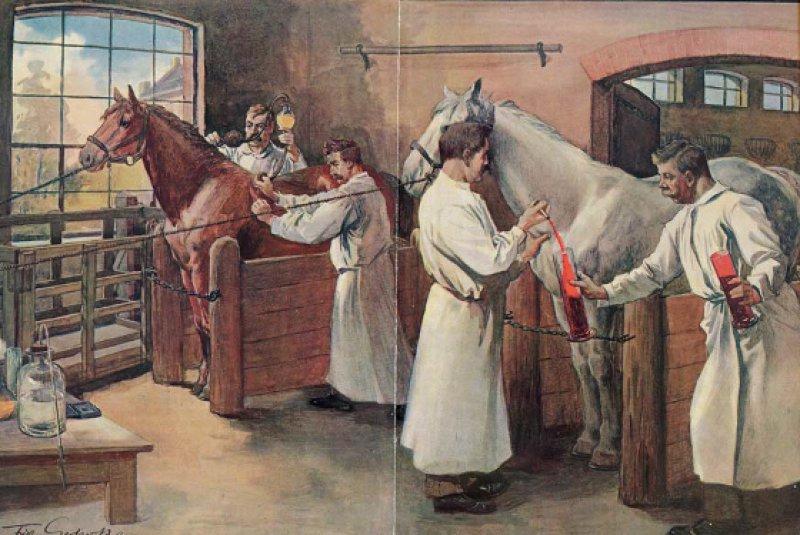 Darstellung der Gewinnung von Diphtherieheilserum am Pferd (Marburg). Fritz Gehrke, 1906. Fotos: Philipps-Universität Marburg