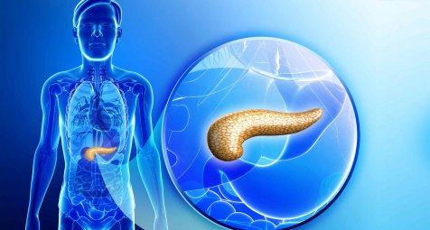 Hierarchie der Betazellen koordiniert Insulinproduktion