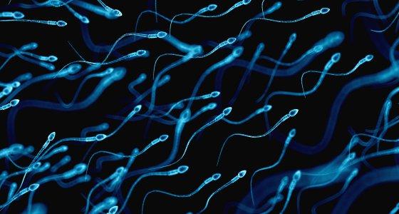 Fruchtbarkeit: Männer produzieren immer weniger Spermien