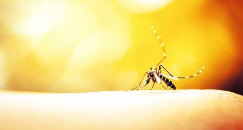 Denguefälle in Brasilien steigen drastisch an
