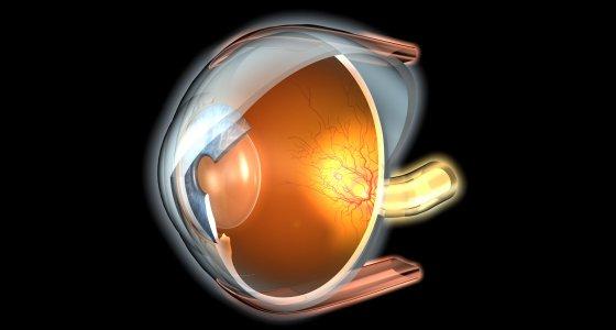 Auge Retina /Axel Kock, stock.adobe.com